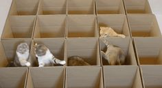 Watch These Cats Frolic In A Paradise Of Boxes