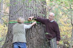 Respect the elderly: Saving cities' oldest trees — Environmental Health News