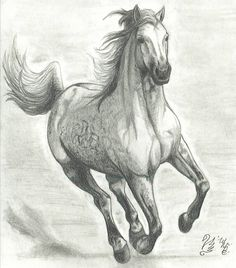 Drawings of Horses Running | Horses Running Drawing Running horse by