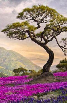 Scenic, vibrant colors in Korea • photo: luchkina on deviantart
