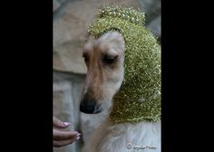 Royal Medieval Snood for Dogs. This just cracks me up. I can't imagine my dog ever consenting to wear this... :)