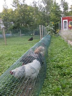 Chicken Run - love this for between the garden rows. And lots of chicken coops.