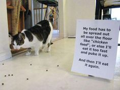cat-shaming-rawdumps-09029