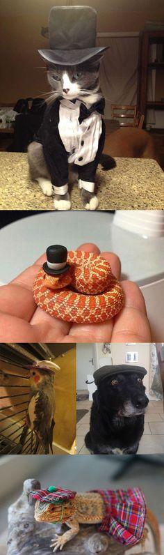 20 Animals Wearing Hats