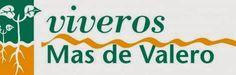 El Informal Segorbino: LA EMPRESA VIVEROS MAS DE VALERO PATROCINARÁ AL CD...