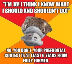 Totally pulled this the other day at work. Thank you, psychology student platypus. You get me.