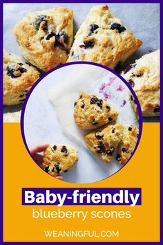 This is the easiest and quickest way to make scones from scratch for your baby, toddler, older kid or the whole family. They have no sugar and with only 3 ingredients you can have a healthy breakfast in less than 30 minutes. You can't beat homemade scones and this recipe is easily adaptable to any fillings and flavours, from fruit, to nuts, veggies or cheese. Fun Snacks For Kids, Healthy Meals For Kids, Easy Healthy Recipes, Baby Food Recipes, Baby Meals, Kid Meals, Meals For One, Baby First Foods, Baby Finger Foods