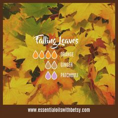 Here are no less than FIFTY-SIX fall essential oil diffuser blends for your enjoyment. Fall diffuser blends make it smell good around the home! Essential Oils For Nausea, Fall Essential Oils, Ginger Essential Oil, Patchouli Essential Oil, Essential Oil Diffuser Blends, Essential Oil Uses, Doterra Diffuser, Perfume Tommy Girl, Aromatherapy