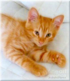 http://fineartamerica.com/featured/quo--kitten-photography-by-giada-rossi-giada-rossi.htmlGiada Rossi