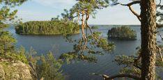 Päijänteen kansallispuisto - Luontoon.fi Story Inspiration, Travel Inspiration, Viria, Natural Beauty, Pray, Nostalgia, Landscapes, Scenery, Blessed