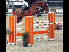 www.sporthorses-online.com 2007 Stakkato grand-son 130 cm placed top jumper prospect for sale - YouTube