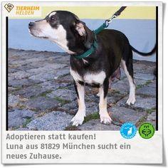 Luna kam hochträchtig aus einer Tötungsstation ins Tierheim München.  http://www.tierheimhelden.de/hund/tierheim-muenchen/mischling/luna/8821-0/  Lunas Welpen sind mittlerweile ausgezogen, sodass auch Luna packbereit ist, um zu einer aktiven Familie, gerne auch zu Kindern, umzuziehen. Da sie im Ausland auch vieles nicht kennengelernt hab braucht es auch
