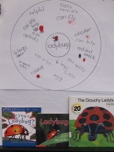 """I plan to use """"The Grouchy Ladybug"""" when I teach Time in Math class, but then I will continue with a Science lesson on ladybugs using nonfiction texts. Can also create Venn Diagram and fill out one day and the next about bees Language Activities, Writing Activities, Preschool Activities, Math Literature, Grouchy Ladybug, Thinking Maps, Informational Writing, Author Studies, Kindergarten Science"""