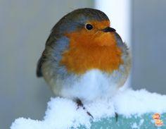#winter #bird #snow Snow, Seasons, Bird, Winter, Animals, Winter Time, Animaux, Seasons Of The Year, Birds