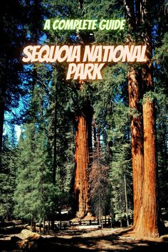 Here is a complete guide to Sequoia National Park. California parks   national park camping   state parks usa   sequia national park   California national parks sequoia national park camping   national park list #SequoiaNationalPark #USAnationalparks #nationalparks #californiaparks Best National Parks Usa, California National Parks, Sequoia National Park Camping, Natural World, State Parks, Vacation, Nature, Travel, Vacations