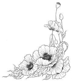 Poppy line drawing