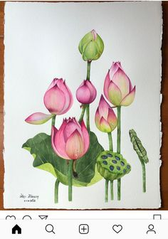 pink lilies, how to draw a flower step by step, colored painting, white background, colorful pencils – BuzzTMZ Watercolor Lotus, Lotus Painting, Fabric Painting, Watercolor Flowers, Botanical Drawings, Botanical Art, Botanical Illustration, Watercolor Illustration, Lotus Flower Art