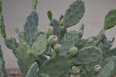Cactus Plants, Cactus, Plant, Planets