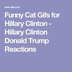 Funny Cat Gifs for Hillary Clinton - Hillary Clinton Donald Trump Reactions