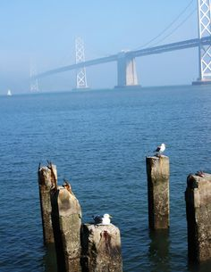 Photo taken from The Embarcadero in San Francisco, CA. The Bay Bridge vanishing due to the fog in the background.