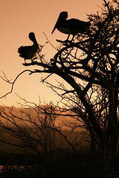 Galapagos Islands | Flickr - Photo Sharing!