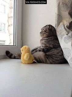 """""""It's a big world out there, Ducky..."""""""