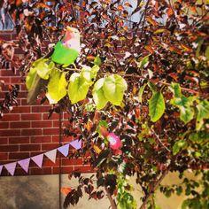 Birdies in the trees