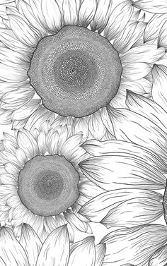 If you're looking for a more versatile floral wallpaper, this black and white sunflower wallpaper is exactly that. Sunflower Head, Sunflower Design, White Sunflower, Wall Drawing, Nature Drawing, Van Gogh Sunflowers, Pop Art Wallpaper, Sunflower Wallpaper, Traditional Wallpaper