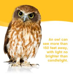 Did you know an owl can see more than 150 feet away with light no brighter than candlelight?