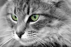 old green eyes