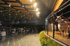 Leilões da ExpoZebu ultrapassam R$ 30 milhões