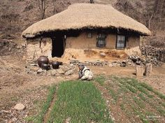 grandma in the mountain, Korea --- scenes that have mostly disappeared from Korea. Korean Traditional, Traditional House, See Think Wonder, Off Grid Survival, Historical Images, Old Pictures, South Korea, Architecture, 14th Century