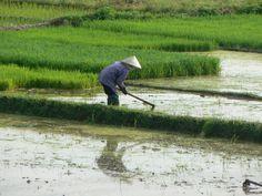 Working hard, Hanoi, VietNam