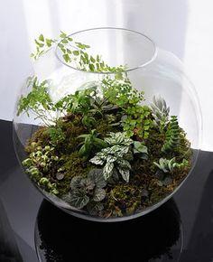 leafy terrarium