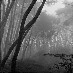 배병우 (1950~ )의 사진 한국의 미, 소나무 사진 배병우 1950년 전라남도 여수 출생 1974년 홍익대학교 미... Contemporary Photographers, Landscape Photographers, Black And White Tree, Maybe Someday, Some Pictures, Fine Art Photography, Photo Art, Earth, Nature
