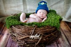 SET Olive Fur and Wood Branch Nest Owl Bird Photography Prop Newborn Baby | Beautiful Photo Props