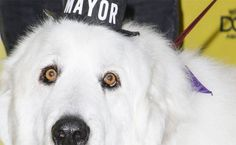 7 Animals Who Ran For Elected Office (And Won!) http://www.care2.com/causes/7-animals-who-ran-for-elected-office-and-won.html