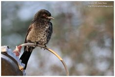 Birdwatching  and  Photography: Un beau matin au milieu de nulle part.