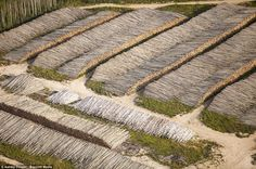 Canada's disappearing boreal forest. Trees felled for the Alberta Tar Sands development. The reality is that for most open-pit tar sands mines, restoring the land to its natural state has never been part of the plan. Help stop this by signing the petition to give to Obama.  http://act.350.org/sign/tar-sands/