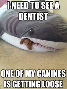 Dentist Are funny too ♥ Time for the dentist? get up to 80% off  www.ToothFairyDiscount.com for only $19.95 a month
