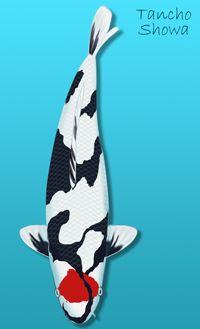 Pinterest the world s catalog of ideas for Tancho koi fish