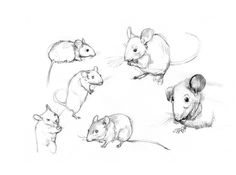 Kelly Murphy Illustration | Secrets At Sea Character Designs