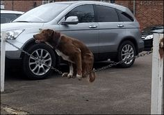 I love cat gifs and dog gifs. Funny Cats, Cute Cats, all the time.Big animals gif lover too. Cute Funny Animals, Funny Cute, Funny Dogs, Hilarious, Cute Puppies, Cute Dogs, Dogs And Puppies, 15 Dogs, Doggies