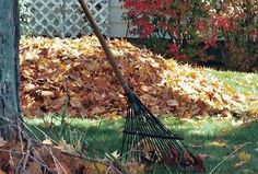 If you haven't yet set up a compost bin - or pile in my case - now is the perfect time. As the autumn leaves start to fall, these are ideal for starting off compost in the garden. http://www.home-dzine.co.za/green/green-composting.htm