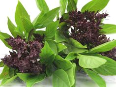 Very strong, clove-scented basil. This heirloom is very popular in Thailand and is a very flavorful specialty variety