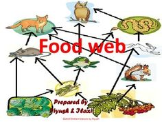 The given power point presentation is prepared to explain how ECOSYSTEM works on our planet. It will be useful to the teachers and students of grades 3rd, 4th, 5th, 6th, 7th,8th,9th and 10th in their ECOSYSTEM UNITS. The idea of this PPT is to describe how FOOD WEB is working and associated closely with FOOD CHAIN in living entities on earth naturally.   I am very happy to upload this module of FOOD WEB after having a grand selling of FOOD CHAIN on TpT with nice response and ratings.