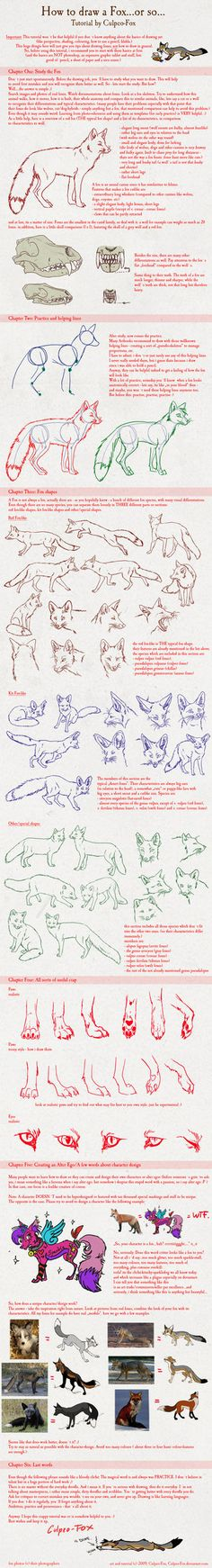 Fox drawing tutorial by Culpeo-Fox via deviantart for paige Doodle Drawing, Fox Drawing, Anatomy Reference, Drawing Reference, Drawing Techniques, Drawing Tips, Fox Art, Character Design References, Learn To Draw