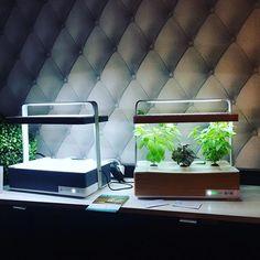 En démonstration à la soirée #Intel #geeksoin10. #culteev #hydroponics #indoorgarden