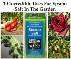 Epsom salt in the garden Permaculture, Horticulture, Organic Gardening, Gardening Tips, Organic Soil, Vegetable Gardening, Epsom Salt Uses, Plantation, Lawn And Garden