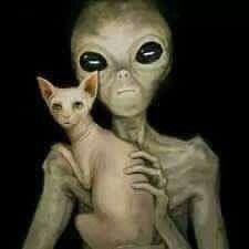 Ufo life